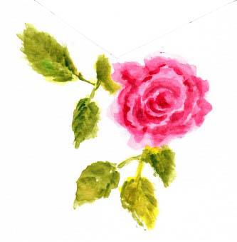 rose-m